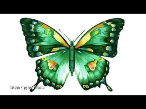 animated butterfly pictures