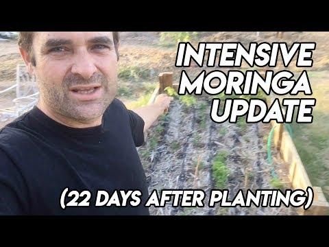 Ep169 - Intensive Moringa 22 Day Update