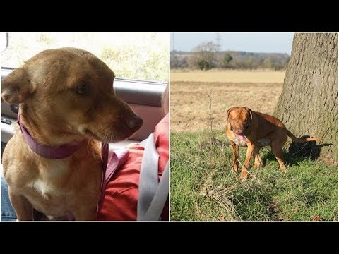 A man threw his dog out of truck as if a piece of trash the dog chased after him until he collapsed