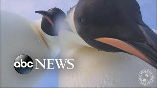 Forgotten camera provides rare glimpse of life in Antarctica