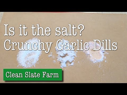 Is it the salt? Making crunchy garlic dill pickles