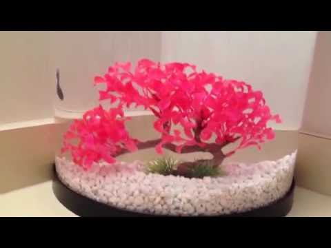How to Clean a Plastic Fish Tank Without Scratching It!