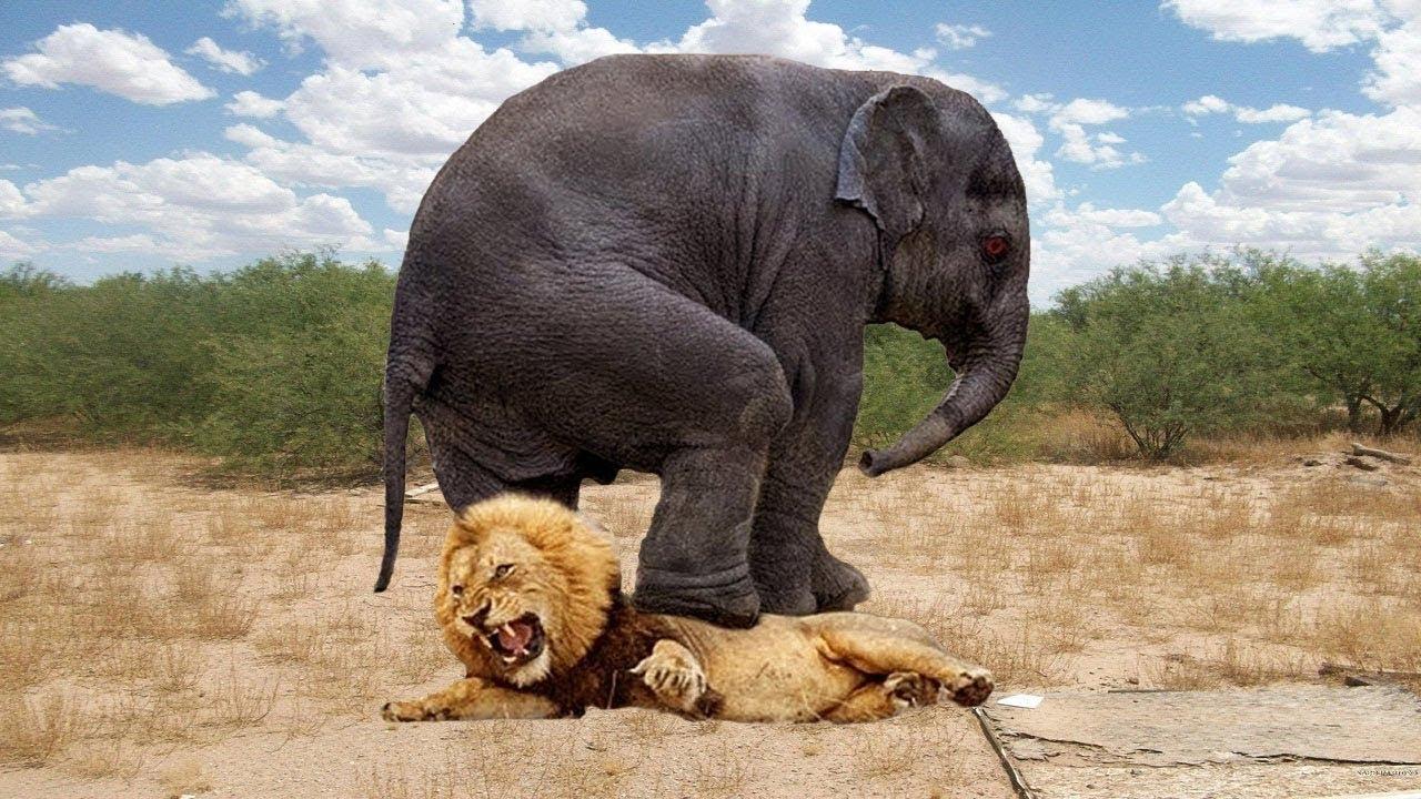 जब हाथी ने कर डाला शेर का शिकार,चौक जाओगे आप!TOP 5 PREYS WHO CAN DEFEND THEMSELVES