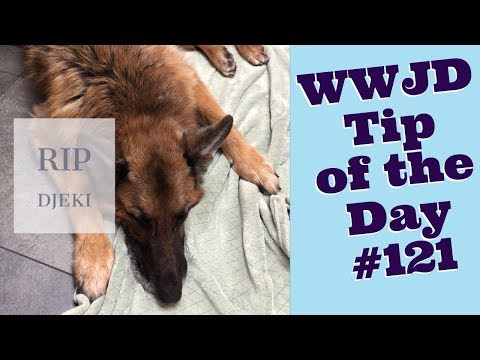 Dogs Dying, What Would Jeff Do? Dog Training Tip of the Day #121