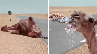 LION SEES HER ADOPTIVE DAD AFTER 7 YEARS