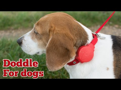 Review of Doddle for dogs combined collar and lead