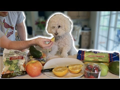 WILL HE EAT IT?! MY DOG TRIES FRUITS AND VEGETABLES!