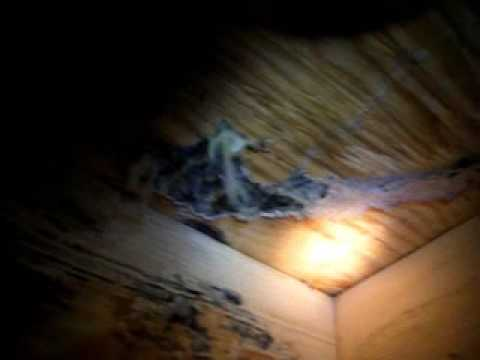 Termite Damage Found At Charlotte Home Inspection