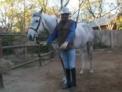 how to teach a horse head down 2