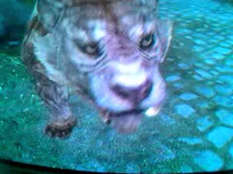 Pet Sabre Cat glich-skyrim