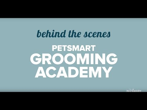 PetSmart Grooming Academy – Get a behind-the-scenes look at our Pet Stylists' extensive training