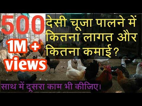 Golden misri hen farming in Pakistan | desi murgi poultry