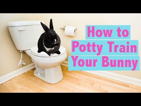 How to Potty Train your Rabbit