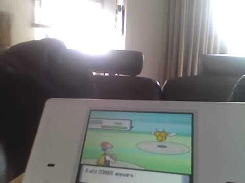 how catch a combee in pokemon diamond