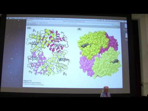 8.  Kevin Ahern's Biochemistry - Hemoglobin