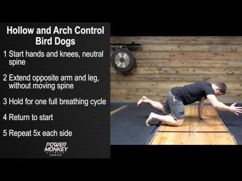 Hollow and Arch Control - Bird Dogs