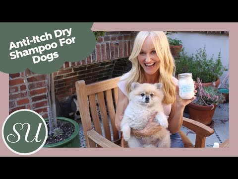 DIY Dry Shampoo For Dogs | Natural Dog Flea, Odor & Itch Solution
