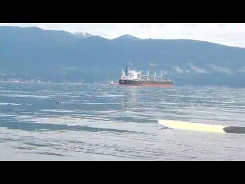 Humpback experience, Vancouver, BC Canada