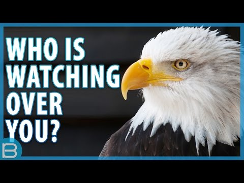 Which Animal Is Watching Over You?