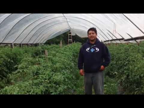 Immigrant Farmer High Tunnel Project, Rodrigo Cala, WI