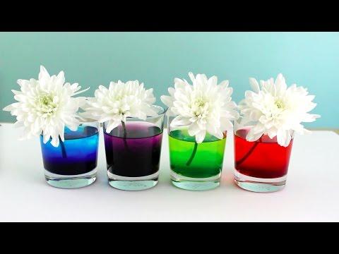 Como Teñir Flores Naturales con Colorante de Comida | Experimento con los Niños!