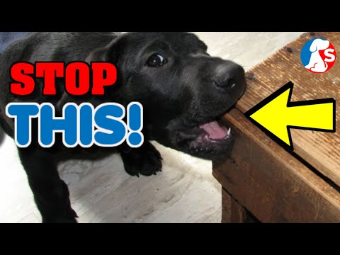 How to stop my dog from chewing things - simple solutions