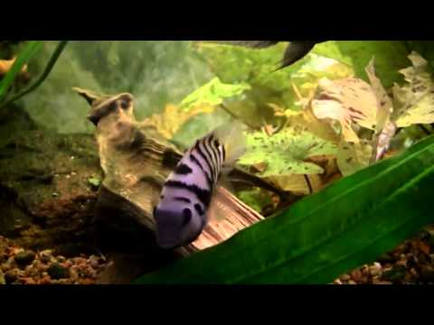 aquafishuae com(buy aquarium product in dubai)