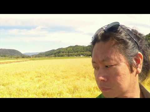 Hokkaido Rice Harvest