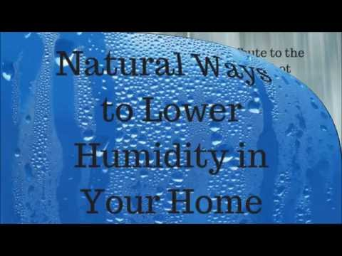 Natural Ways to Lower Humidity in Your Home