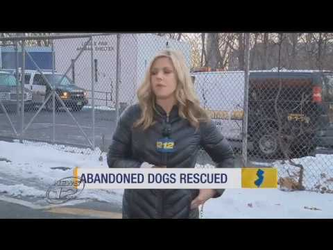 12 Emaciated Dogs Rescued From Home In Paterson (via News 12 New Jersey)