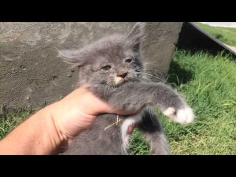 Kitty Hunting 101