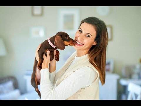 Xxx Mp4 যে দেশের মেয়েরা পশুর সঙ্গে সংসার করে Ll Harassment On Animals Ll Harassment Ll MSR NEWS 3gp Sex