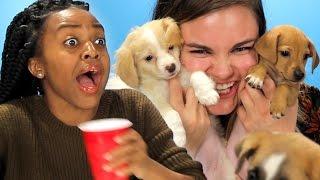Drunk Girls Get Surprised With Puppies