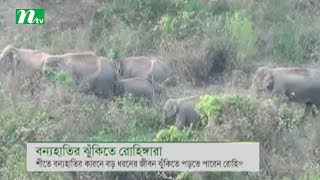 Rohingyas fear attack of wild elephant
