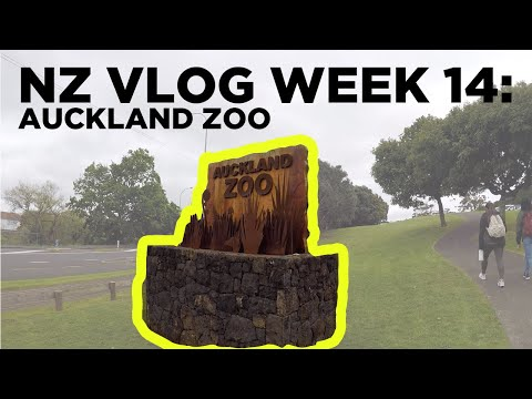 VISITING AUCKLAND ZOO (Tasmanian Devil and More!) | NZ Vlog Week 14
