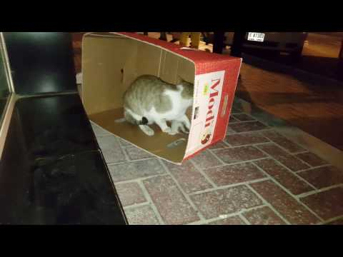 How to help a stray cat with kittens find shelter - Sweet Cute Kittens!