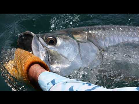 Fly Fishing Giant Tarpon, Texas Gulf Coast, KT Diaries