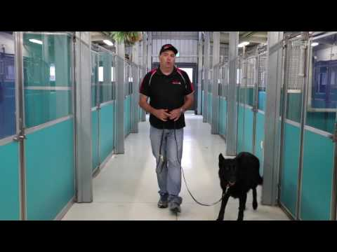 Free Walk Dog Training Melbourne | Abba Dog Kennels Melbourne