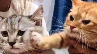 Cute Cats And Dogs Reactions 😹 Animals Doing Funny Things 😆