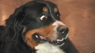 Funny Dogs Scared of Farts Compilation