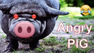 Angry Peppa pig ★ 7 Seconds of Happiness ★ FUNNY Video 😂