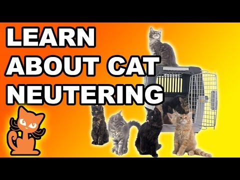 Neutering a Cat: Should I fix my cat? Info on making the decision to sterilize your cat