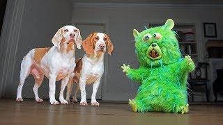 Dogs vs Annoying Hamster: Funny Dogs Maymo & Potpie