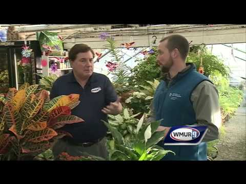 Grow it Green: Caring for houseplants