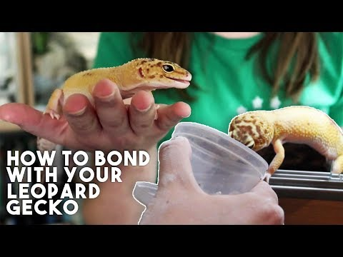 5 TIPS TO MAKE YOUR GECKO LOVE YOU!