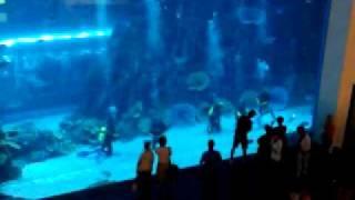#x202b;اكبر حوض سمك في العالم @دبي مول#x202c;lrm;