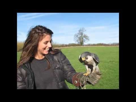 Bird on the Hand Falconry experience day