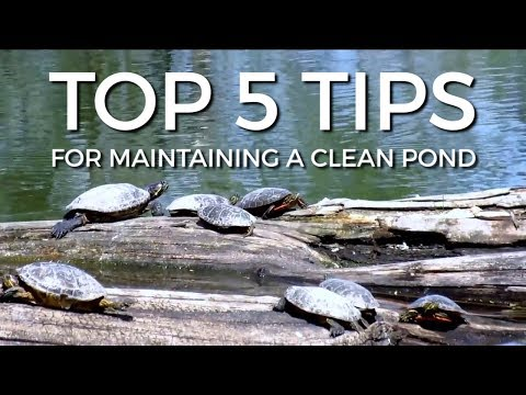 TOP 5 TIPS FOR MAINTAINING A CLEAN POND