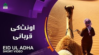 expert-bakra-qasaai-eid-ul-azha-qurbani-video-expert-bakra-qasaai