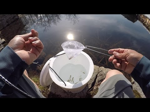 Fishing Round Pond, West Point NY, with live minnows